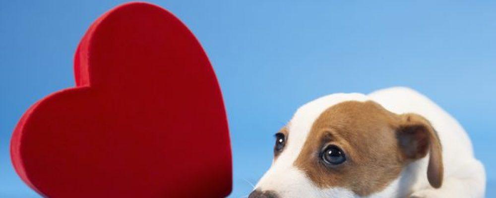 هل تصاب الكلاب بأمراض القلب؟ الذبحة الصدرية عند الكلاب