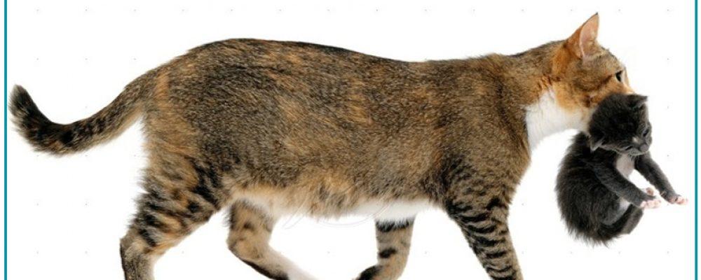 لماذا تغير القطط مكان اولادها .. 3 أسباب لم تسمع عنها من قبل