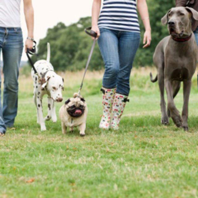 ملف شامل عن تمشية الكلاب (الفوائد و الاضرار)