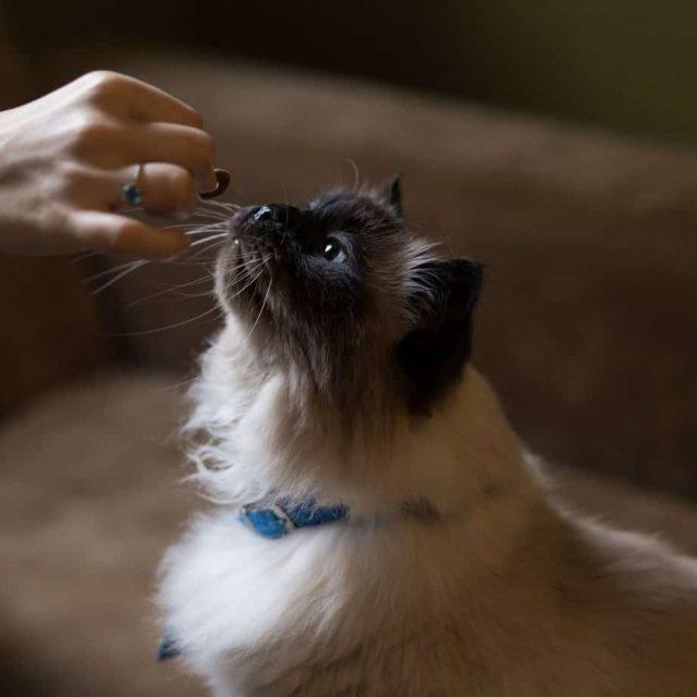 فاتح شهية القطط .. 3 طرق لعلاج مشكلة الشهية