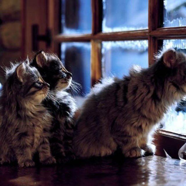 تعرف على طرق العناية بالقطط في فصل الشتاء