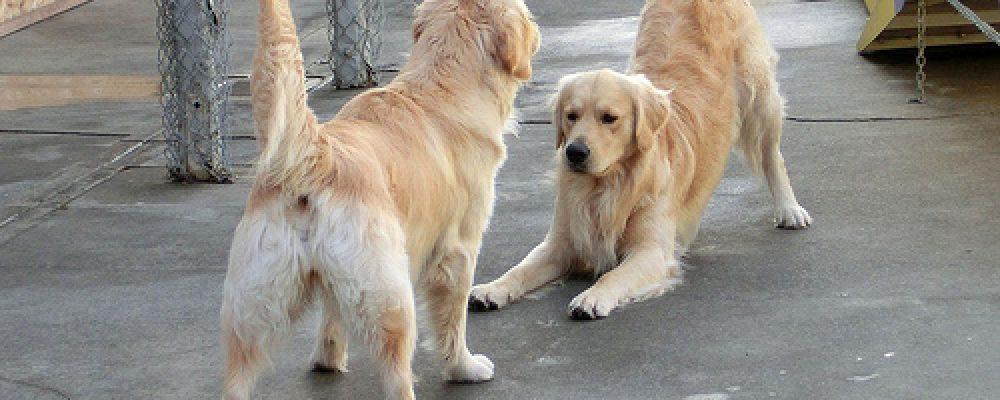 علامات السعادة في الكلاب: لماذا ينحني الكلب بساقيه الأماميتين؟