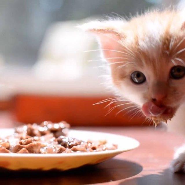 5 نصائح لاختيار أطباق طعام القطط