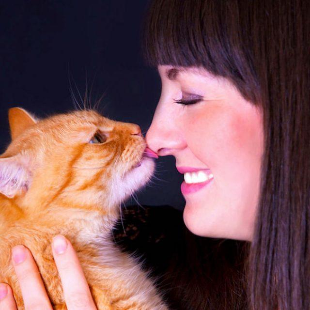 كيف اجعل قطتي تسمع كلامي : تدريب القطط على الطاعة