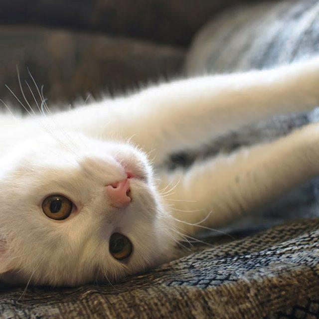 أسباب و علاج خدش القطط للأثاث