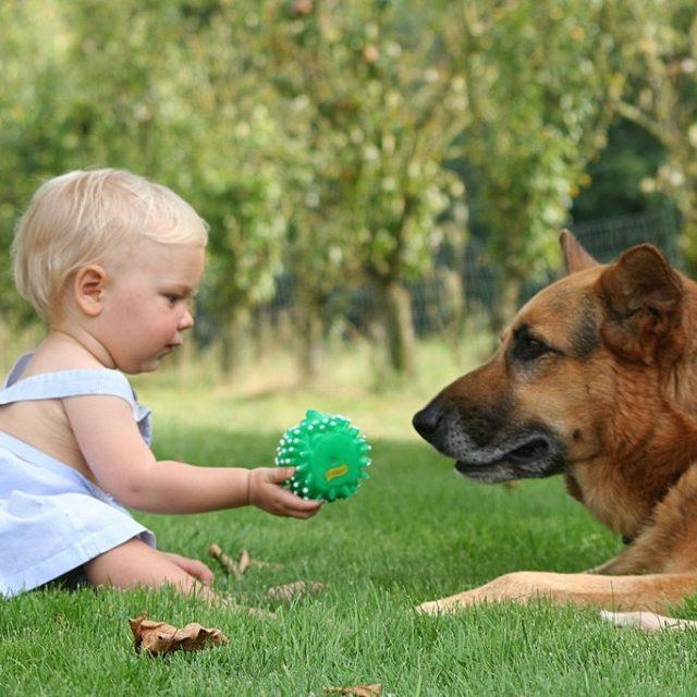 فوائد تربية الكلاب مع الأطفال