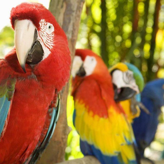 طريقة تحديد عمر طيور الزينة