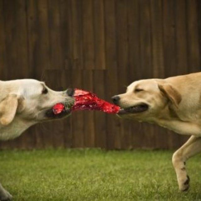 6 طرق تمنع تحول وقت طعام الكلاب إلى معركة