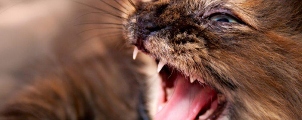5 إشارات خفية تدل على مرض القطط