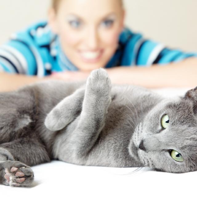 5 معلومات عن تربية القطط قبل الشراء