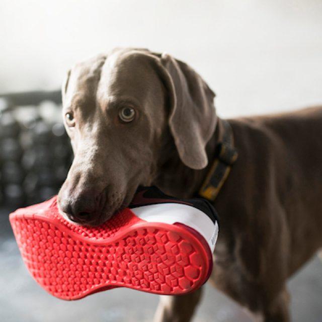 6 علامات تدل على أن كلبك لا يقوم بالنشاط البدني الكافي