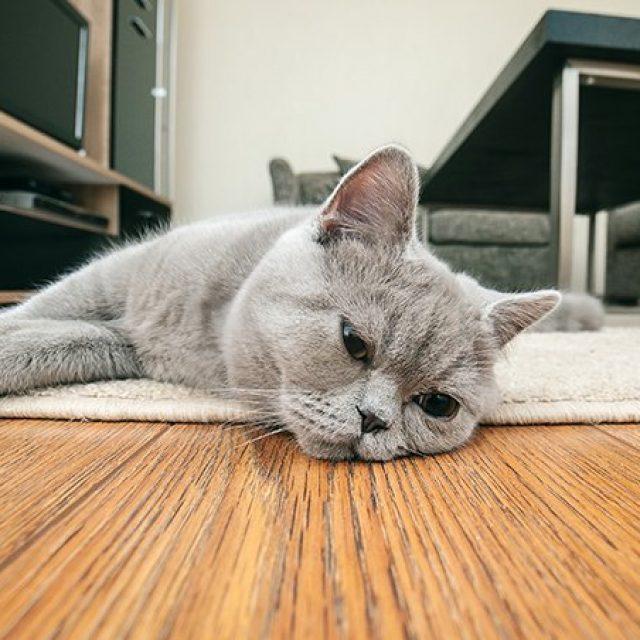 9 خطوات يجب أن تقوم بها قبل ان تترك قطتك في المنزل